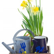 Gardening tools with daffodils — Stock Photo #40466589
