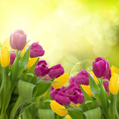 Tulips flowers on colorful bokeh background — Stock Photo