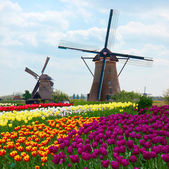 Two dutch windmills over tulips field — Stock Photo