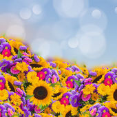 Flowers garden with sunflowers — Stock Photo