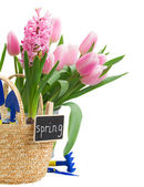 Gardening tools with hyacinth and tulips — 图库照片