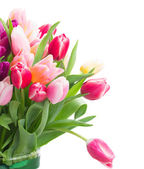 Pink and violet tulips close up — Стоковое фото
