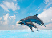 Group of jumping dolphins — Stock Photo