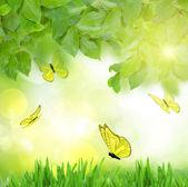 Groene tuin met vlinders — Stockfoto
