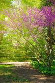 Våren i japanska trädgården — Stockfoto
