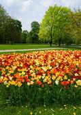 Spring in Saski park, Warsaw — Stock Photo
