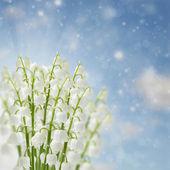 Lilly dalen blommor — Stockfoto