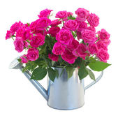 Posy of blossoming pink roses in watering can — Stock Photo