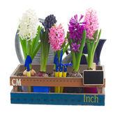 Set of  hyacinth flowers — Stock Photo