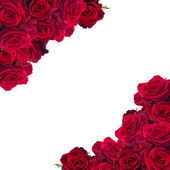 Frame of dark  red roses — Stock Photo