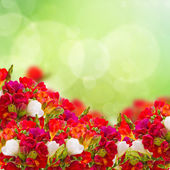 Red freesia flowers in garden — Stock Photo