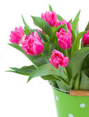 Pink double tulips close up — Stock Photo