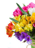 Freesia and daffodil  flowers — Stock Photo