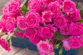 Heap  of fresh pink roses close up — Stock Photo