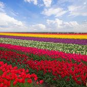 Pembe manolya çiçek — Stok fotoğraf