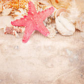Old paper with sea shells — Stock Photo