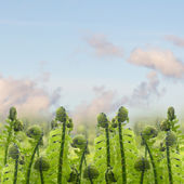 Green ferm sprouts under blue sky — Stock Photo