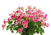 新鮮なピンクのバラの花束をクローズ アップ — ストック写真