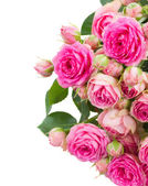 Border of  fresh pink roses close up — Stock Photo