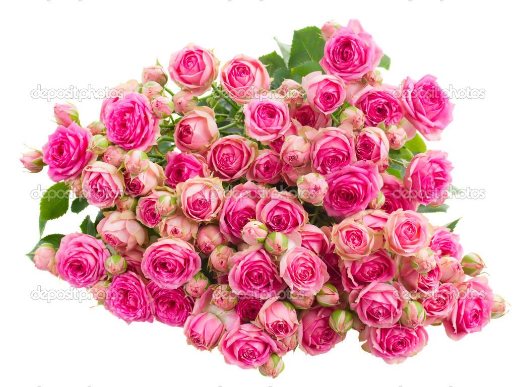Фото большой букет цветов на белом фоне