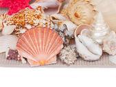 Seashells border — Stock Photo