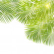 Green palm leaves border — Stock Photo #45200595