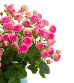 Bouqet of fresh pink roses close up — Stock Photo