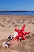 Starfish ans seashells on sea shore — Stock Photo