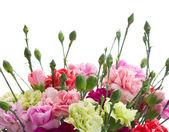 Border of carnation flowers — Stock Photo