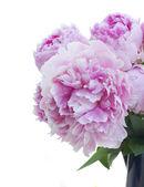 Bouquet of pink peonies — Stock Photo