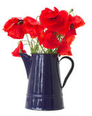 Posy of poppy flowers — Stock Photo