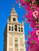 Bell tower Giralda, Seville, Spain — Stock Photo