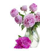 Kytice růžových pivoněk — Stock fotografie