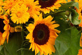 Sunflowers and marigold flowers close up — Stock Photo