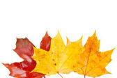 Frontera de amarillo, naranja y rojo otoño hojas — Foto de Stock