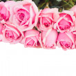 Border of fresh pink garden roses — Stock Photo #50632615