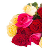 Bouquet of fresh multicolored  roses — Stock Photo