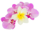 Row of pink  orchid flowers — Stock Photo