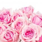 Border of pink garden roses — Stock Photo #51657297