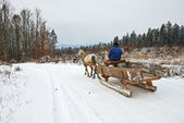 Winter sledge harnessed by horses — Stock Photo