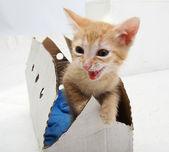 Kitten in a box — Stock Photo