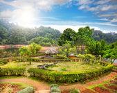 Garden in India — Stock Photo