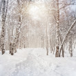 Stock Photo: Winter birchwood