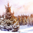 Winter spruce forest in mountains — Stock Photo