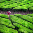 Yoga in tea plantations — Stock Photo