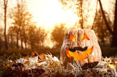Funny Halloween pumpkin in the forest — Stock Photo