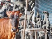 La vaca en la india — Foto de Stock