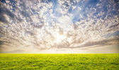 Green grass and sunset sky background — Stok fotoğraf
