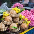 Постер, плакат: Flower and coconuts in India