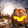 Halloween pumpkin in the forest — Stock Photo